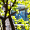 "The Duckering Building's logo is seen through a tree and water droplets on a sunny may morning.  <div class=""ss-paypal-button"">Filename: CAM-12-3421-62.jpg</div><div class=""ss-paypal-button-end"" style=""""></div>"