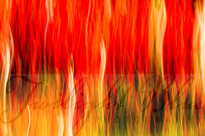 """""""Autumn Fire""""  This image portrays the feverish color that runs rampant throughout Canaan Valley, West Virginia in the fall season. The vibrant red of the huckleberry bushes can be seen for miles in the Dolly Sods Wilderness area located in Monongahela National Forest. The abstract image was created in-camera using a Canon 7D and 16-35 mm lens."""