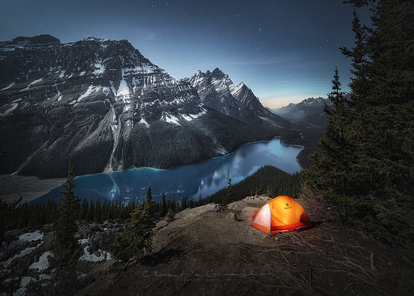 Peyto under the stars