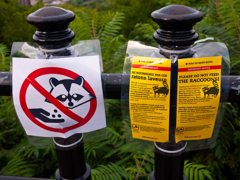 Don't Feed the Racoons