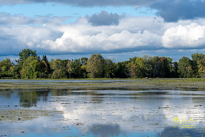 Mud Lake, Britannia Conservation Area, Ottawa