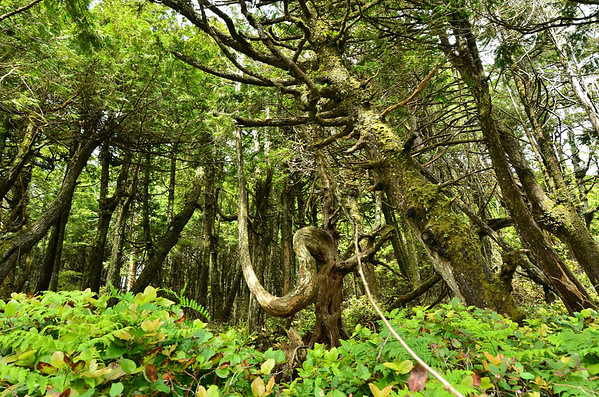 Rainforest, Wild Pacific Rim Trail, Vancouver Island;
