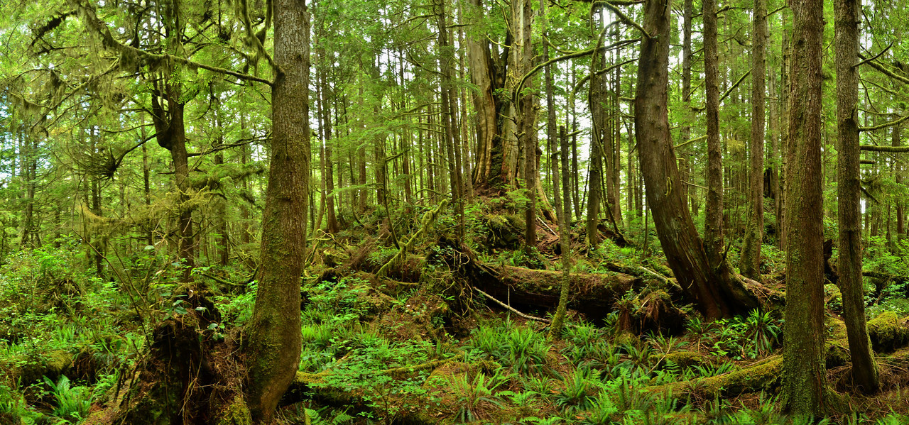 Boreal Rainforest