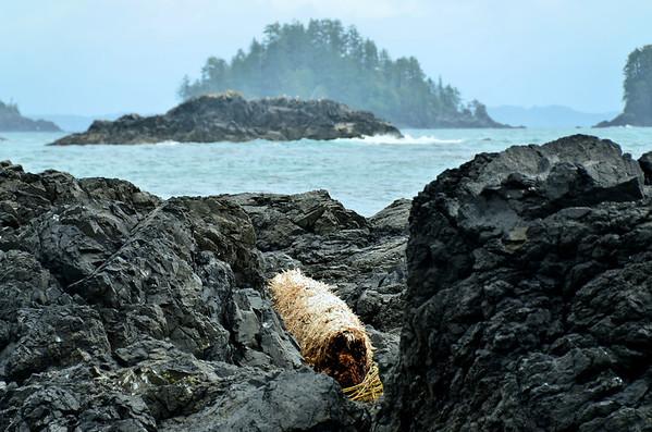 Drift wood, Wild Pacific Rim Trail, Vancouver Island;