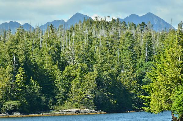 Rainforest, Clayoquot Sound, Vancouver Island;