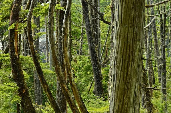 Rainforest, Wild Pacific Rim, Vancouver Island