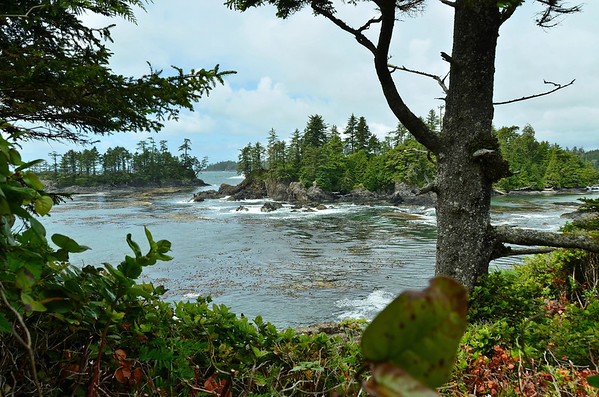 Wild Pacific Rim trail at Ucuelet, Vancouver Island
