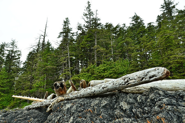 Drift wood, Long Beach, Vancouver Island