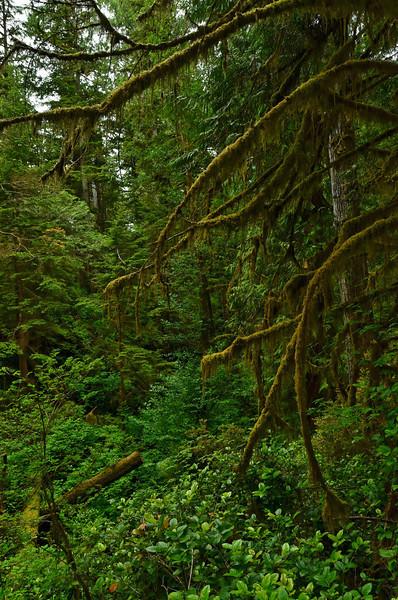 Rainforest, Pacific Rim NP, Vancouver Island;