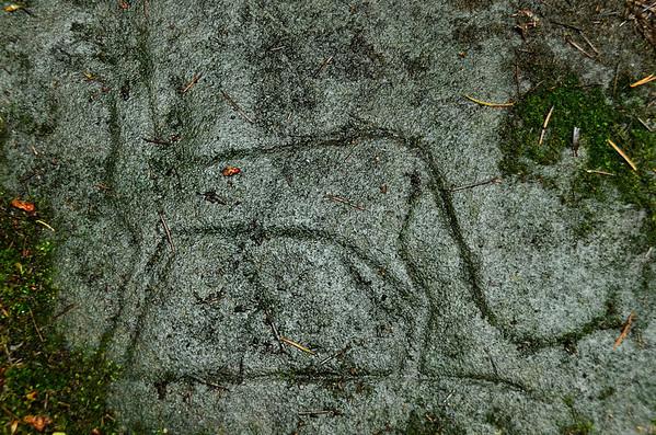 Petroglyphs, Nanaimo, Vancouver Island;