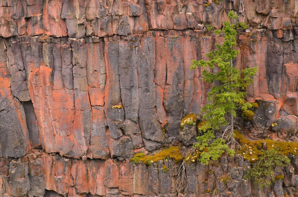 Basalt columns, Spahat Canyon, Wells Gray NP, BC, Canada
