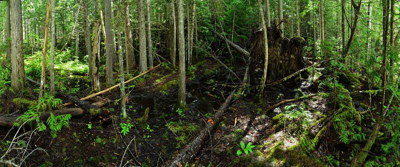 Rainforest, Wells Gray NP, BC, Canada