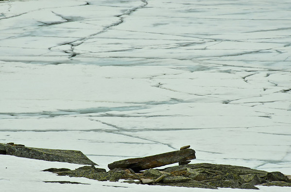 Ice floes on Lake Oesa, Lake O'Hara, Yoho NP, British Columbia, Canada