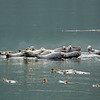 Island of seals
