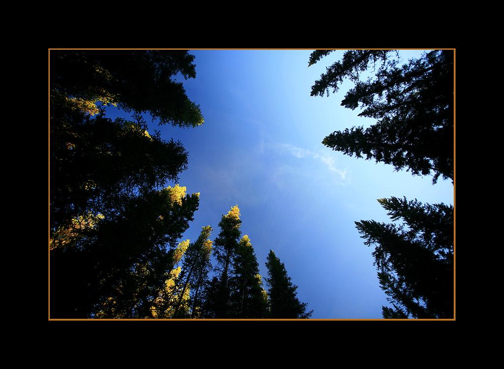Circle of Trees at Sunrise