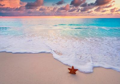 star fish on sandy beach with sunset