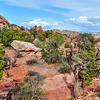 Ponderosa Pines in the Desert