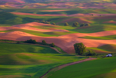 Checkerboard Palouse