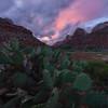 The Desert Life