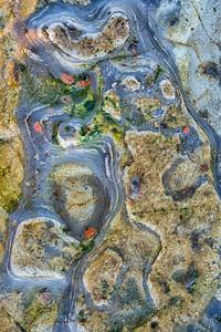 Tide Pool Rocks