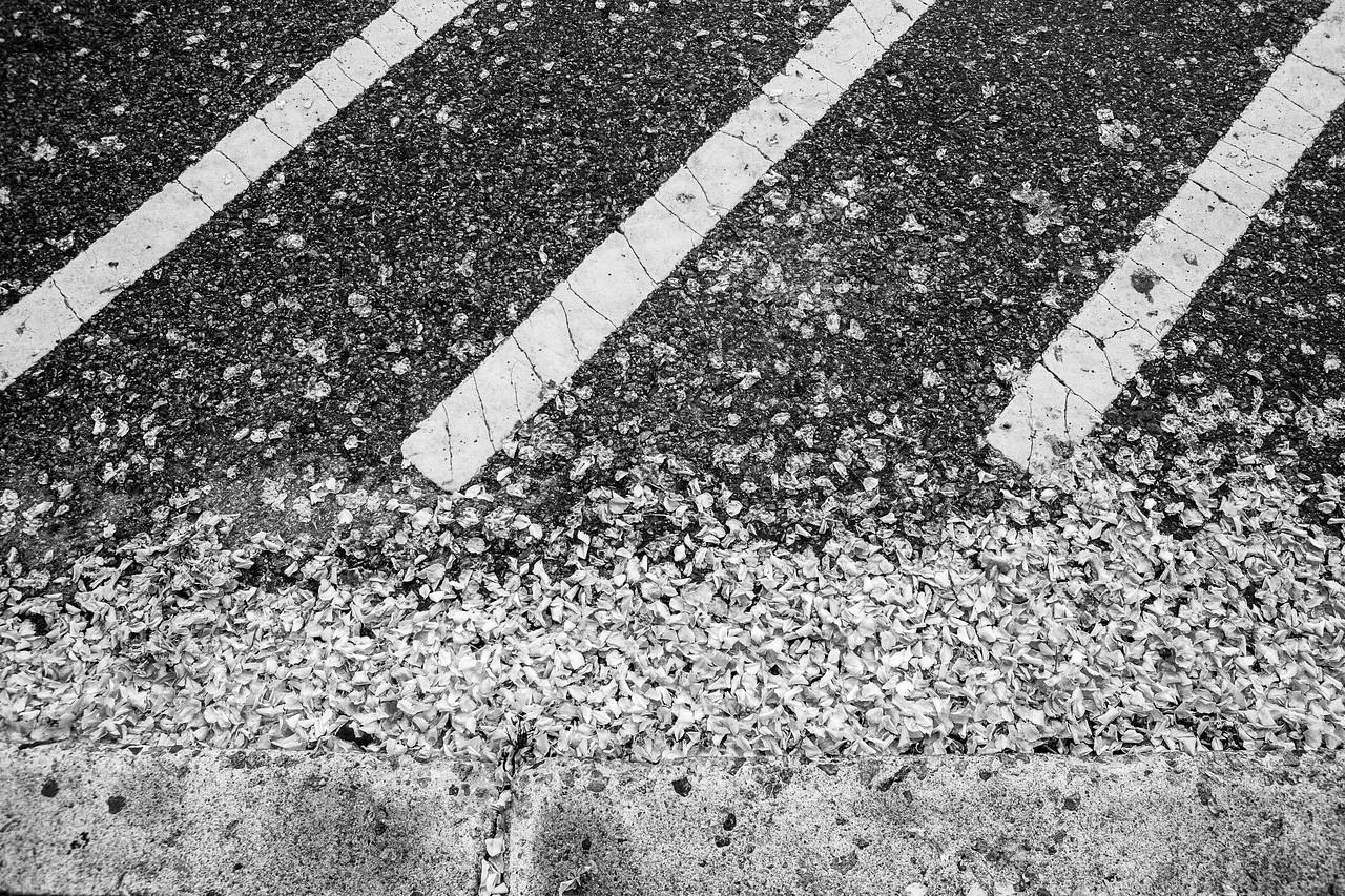 Lines, Petals