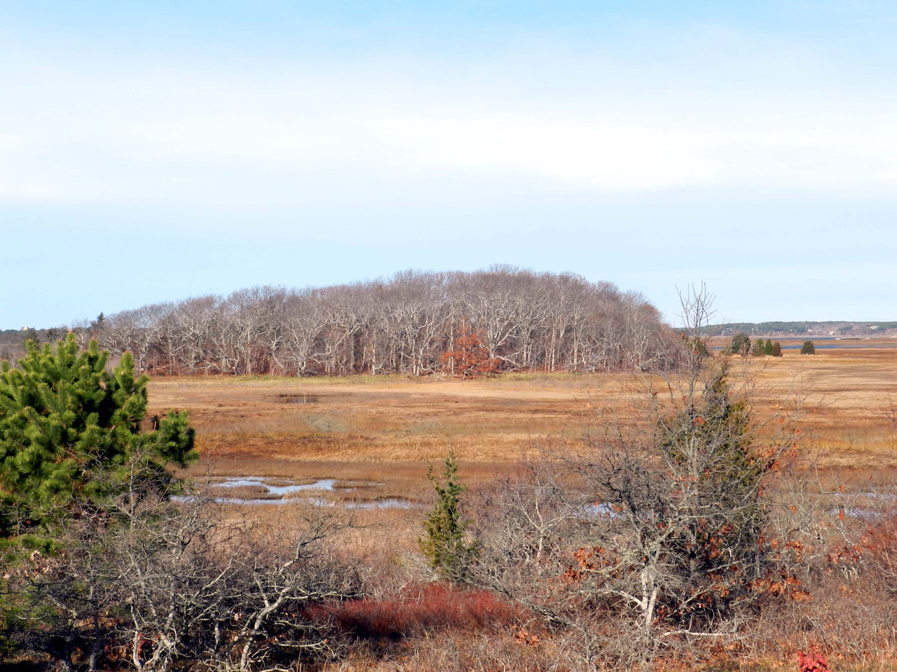 view from the MA Audubon Sanctuary in Wellfleet -- an oak grove dominating a kame formation in the marsh speaks to glacial foundations and reminds me of home.