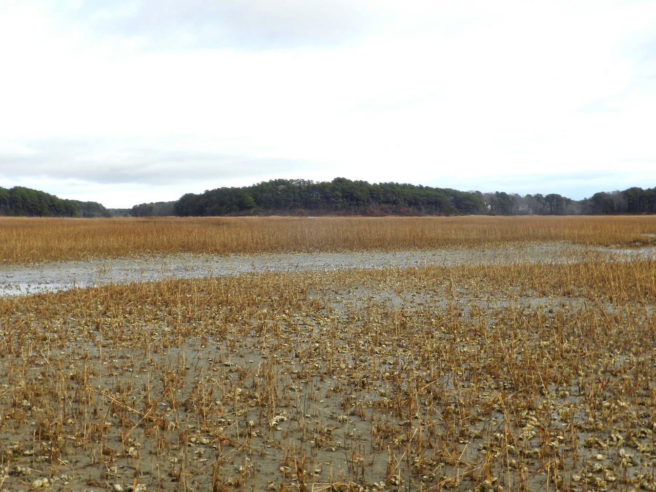 view toward the Audubon Sanctuary from a salt marsh across the bay, low tide, early December.