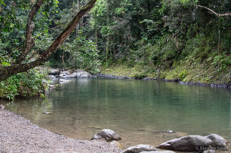 A river swimming hole where there were quite a lot of small fish.