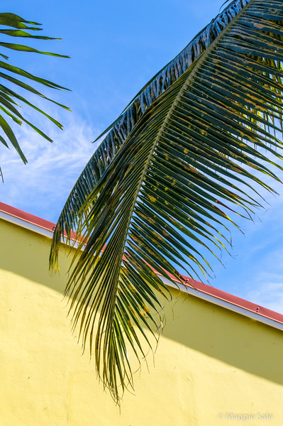 Palm frond and church wall, Gustavia.