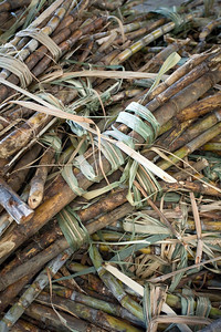 Sugarcane ready to be turned into rum, River Antoine Rum Distillery, Grenada, West Indies
