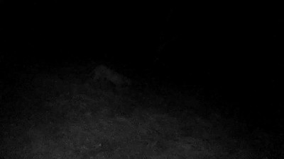 Video: Oct 24, 2017, 5:00am, clearing below the house