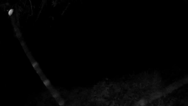 1/7/2018, 1:16 am, walking up the driveway.