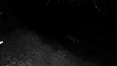 Video: Oct. 24, 4:54am,  walking up the drivway