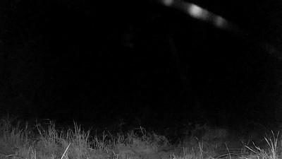 Owl hunting
