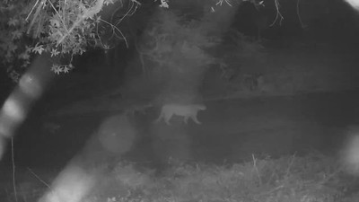Female with cubs, Feb 2021