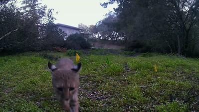 bobcat baptizes a new camera