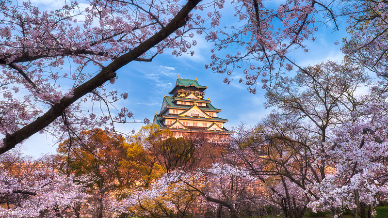 Sentinel of the Sakura