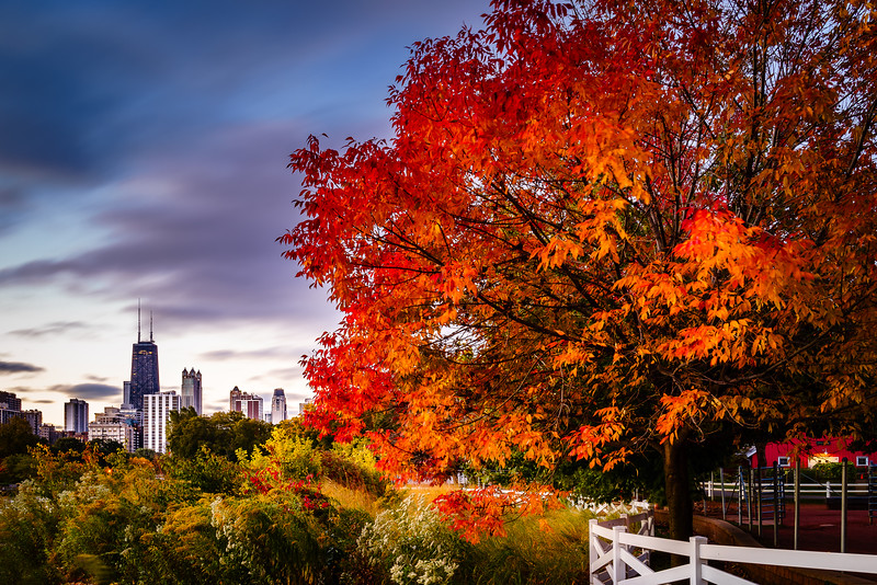 Autumn in Chicago