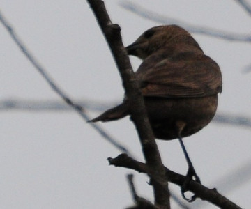 Another shot of the mystery bird.