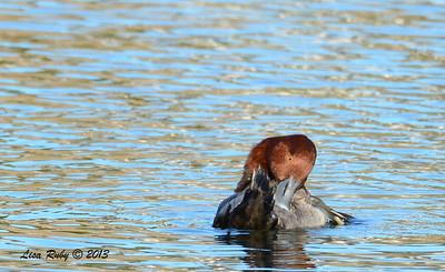 Rehead - 12/23/13 - Santee Lakes