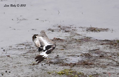 Stretching Willet - 8/2/2015 - Robb Field