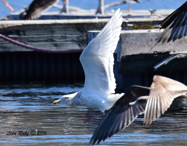 ? - 2/6/2016 - Lower Otay Lake, Chula Vista