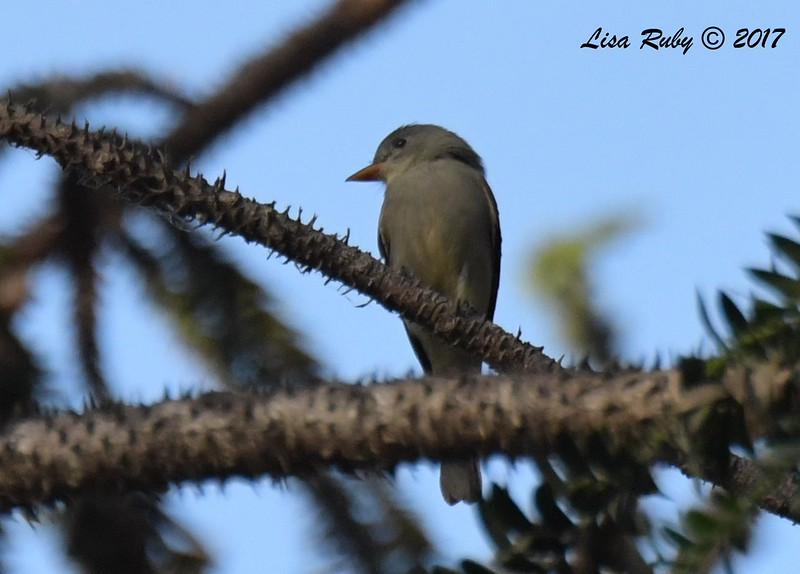 Greater PeWee - 12/16/2017 - Balboa Park