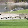 Canada Geese - 2/17/2018 - Borrego Springs Roadrunner Club