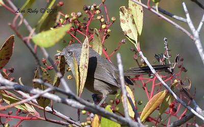 - 2/14/2021 - Penasquitos Creek Trail, Sabre Springs