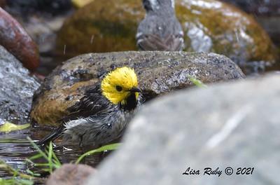 - 5/2/2021 - Bird and Butterfly Garden, Monument Rd
