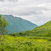 Hatcher Pass Lone Tree