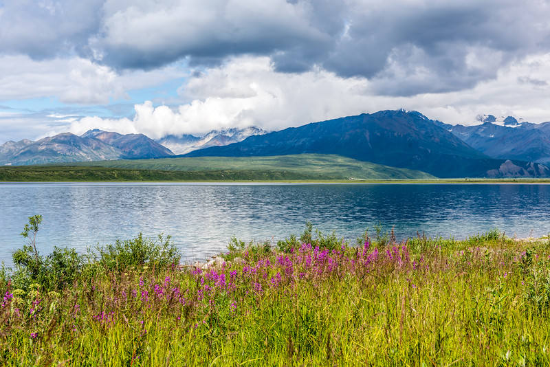 Summit Lake Wildflowers