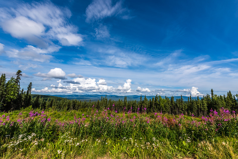 Cloud Shadows & Fireweed