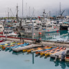 Harbor Color
